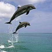 Pair Of Bottle Nose Dolphins Jumping Art Print