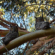 Pair Of Great Horned Owls Art Print
