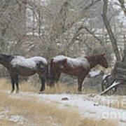Pair Of Horses In A Snow Storm   #0559 Art Print