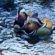 Pair Of Male Mandarin Duck-signed-#8236 Art Print