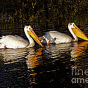Pair Of Pelicans   #6935 Art Print