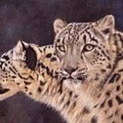 Pair Of Snow Leopards Art Print