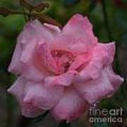 Pale Pink Beauty Art Print
