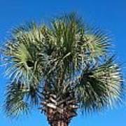 Palm Against Blue Sky Art Print