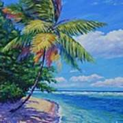 Palm At The Water's Edge Art Print