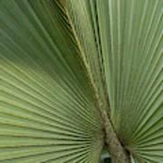 Palm, Belize Botanic Garden Art Print