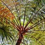 Palm Canopy Art Print