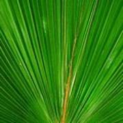 Palm Closeup Art Print