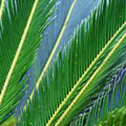 Palm Cycas Fronds Art Print