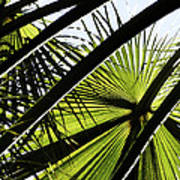 La Palm 3  Art Print