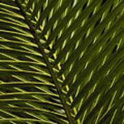 Palm Frond Patterns Art Print