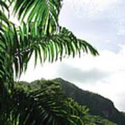 Palm Fronds El Yunque Art Print