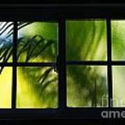 Palm In A Window Art Print