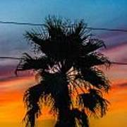 Palm In The Sunset Art Print
