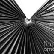 Palm Leaf 6684bw Art Print