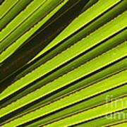 Palm Lines Art Print