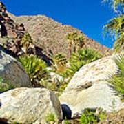 Palm Oasis On Borrego Palm Canyon Trail In Anza-borrego Desert Sp-ca Art Print