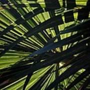Palm Shadows Art Print