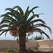 Palm Tree 3 Art Print