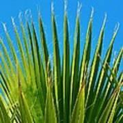 Palm Tree And Blue Sky 2/06 Art Print