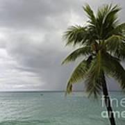 Palm Tree And Ocean Art Print