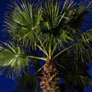 Palm Tree At Night Art Print
