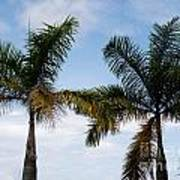 Palm Tree In Costa Rica Art Print