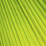 Palm Tree Leaf Abstract Art Print