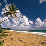 Palm Tree On Maunabo Beach Puerto Rico Art Print