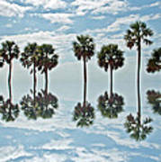 Palm Tree Reflection Art Print