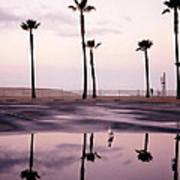 Palm Tree Reflections Art Print