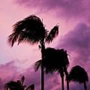 Palm Tree Silhouettes At Dusk In Aruba Art Print