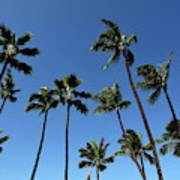 Palm Trees Against A Clear Blue Sky Art Print