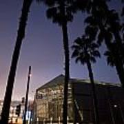 Palm Trees And Hp Pavilion San Jose At Night Art Print