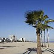 Palm Trees At Long Beach California Art Print