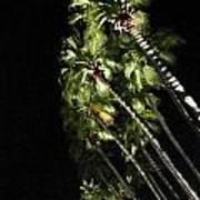 Palm Trees At Night Art Print