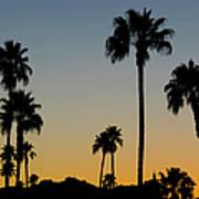 Palm Trees At Sunset Art Print