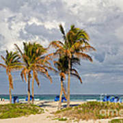 Palm Trees At The Beach Art Print