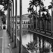 Palm Trees Bordering A Pool Art Print