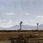 Palm Trees In Elche Art Print