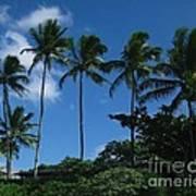 Palm Trees In Hawaii Art Print