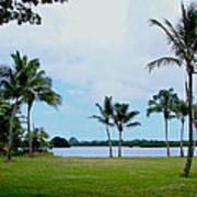 Palm Trees In Oahu Art Print