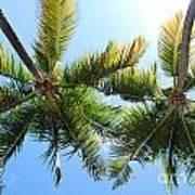 Palm Trees In Puerto Rico Art Print