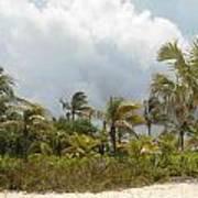 Palm Trees In Sunlight Art Print
