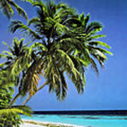 Palm Trees On Little Palm Island Filtered Art Print