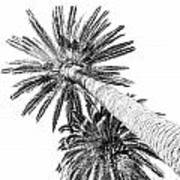 Palm Tree White Art Print