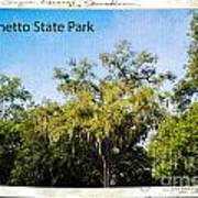 Palmetto State Park Art Print