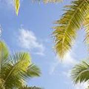 Palms And Sky Art Print