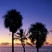 Palms At Sunrise Art Print