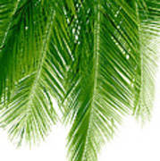 Palms Green Print by Boon Mee